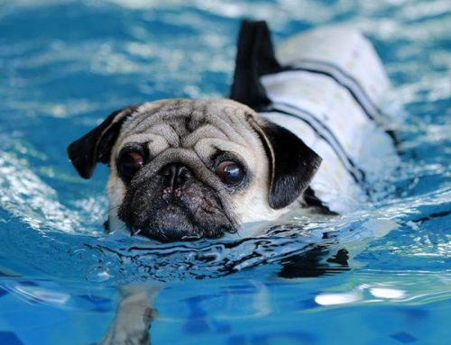 Dangerous Waters: Why Your Dog Should Only Swim Indoors by Sheila Postotnik